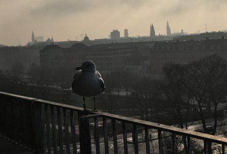 Mågen Låge, der sidder og våger over os...og venter på mad!